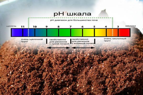 Кислотность почвы для растений: таблица уровня ph для огородных и других растений, для клематиса и азалии, для хвойных и актинидии