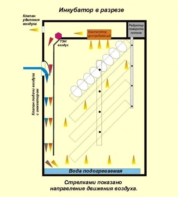 Как сделать инкубатор своими руками из пенопласта и холодильника: устройство и схема