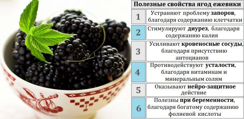 Белая смородина: польза и вред для здоровья, уход и выращивание