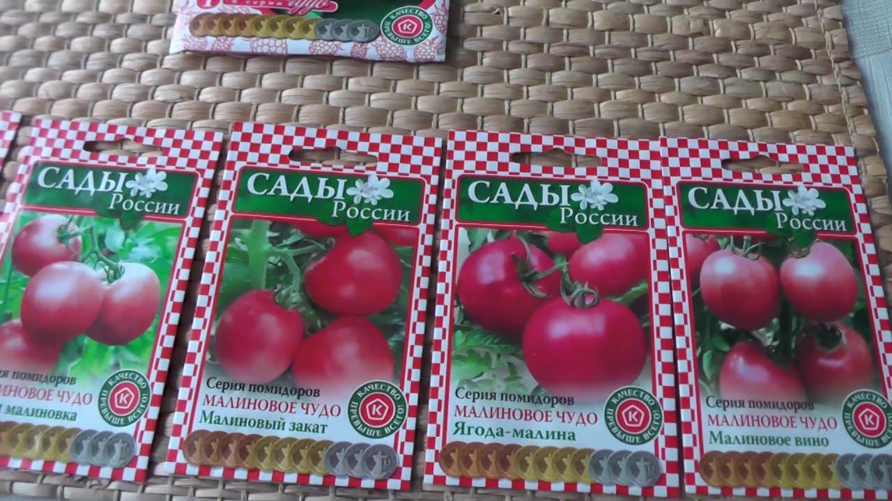 Семена томатов от коллекционеров на 2020 год: самые редкие сорта помидоров, их описание и советы от селекционеров