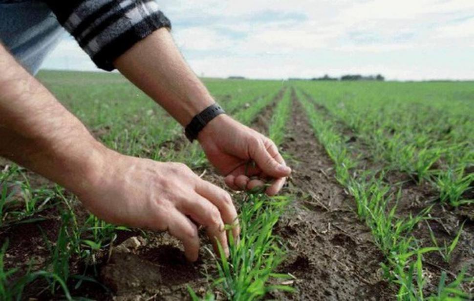 Выращивание шпината на даче: полезный продукт для собственного потребления