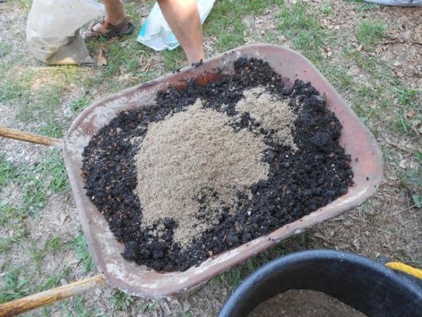Как подкармливать голубику, чтобы получать стабильный урожай
