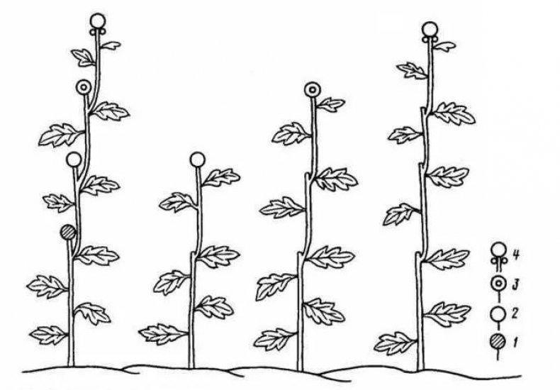 Арбуз в теплице из поликарбоната: как выращивать вместе с дыней? условия посадки и ухода за бахчевой культурой русский фермер