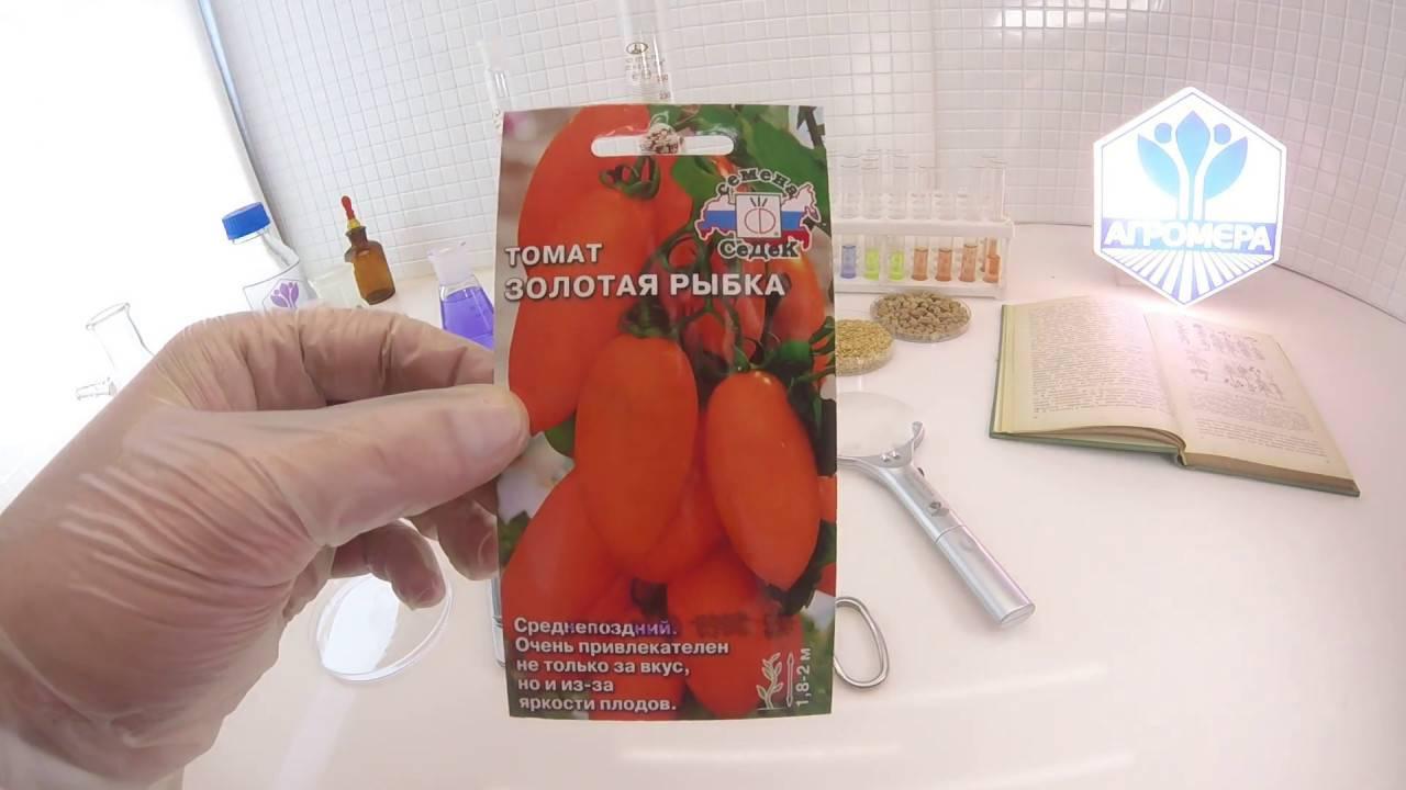 Томат золотая рыбка: характеристика и описание сорта, урожайность с фото и видео