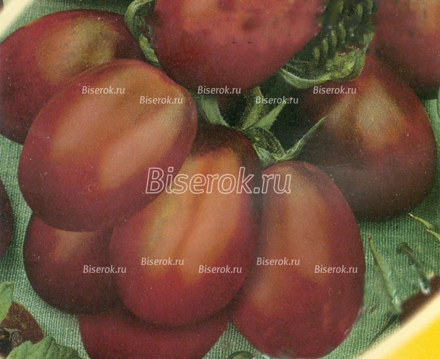 Описание томата Монисто шоколадное и других его разновидностей