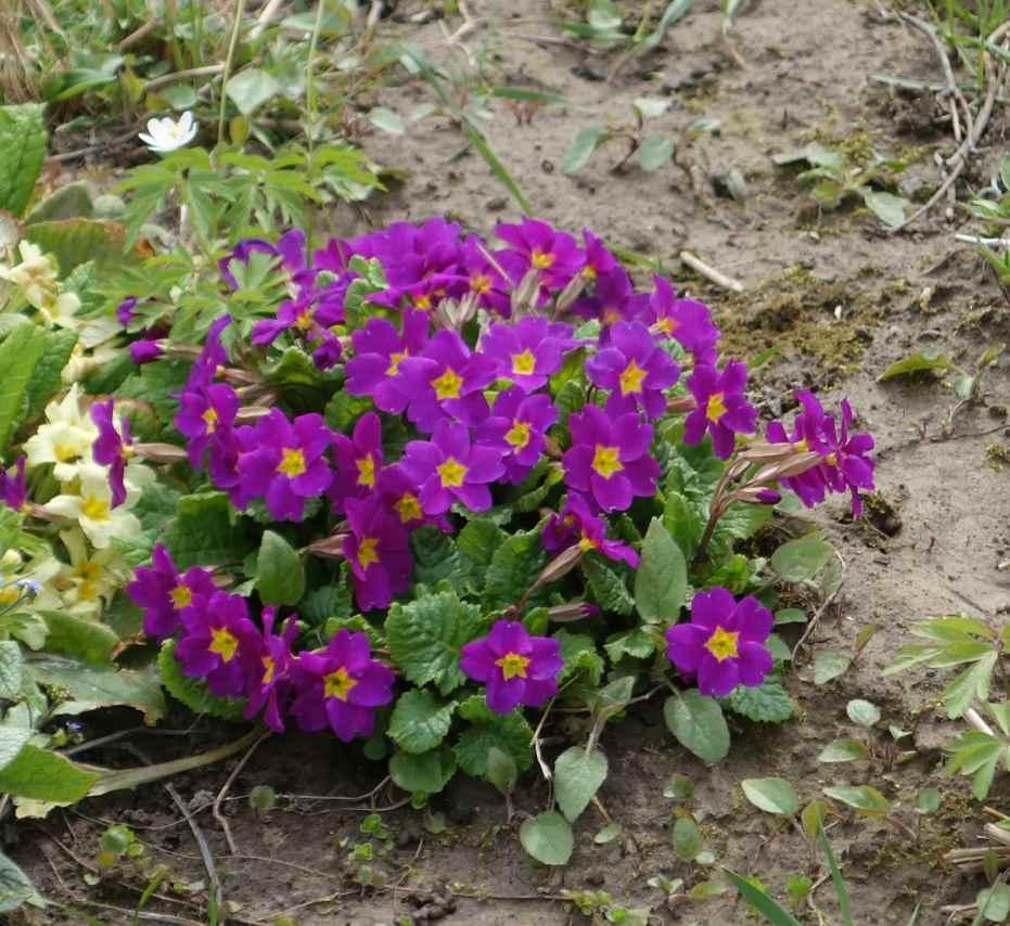 Какие цветы садить весной