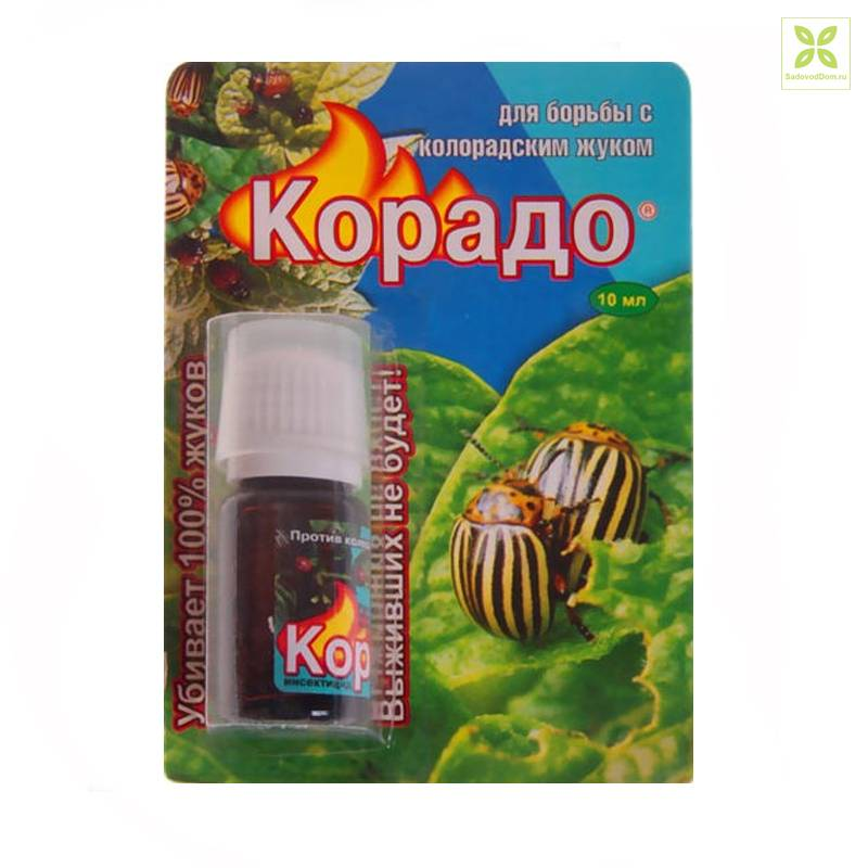 Инсектицид корадо и его применение против колорадских жуков