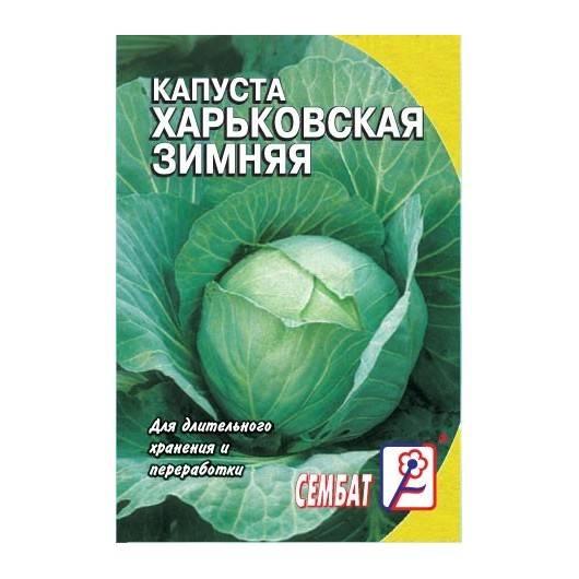 ✅ о капусте харьковская: описание позднего сорта, особенности выращивания - tehnomir32.ru