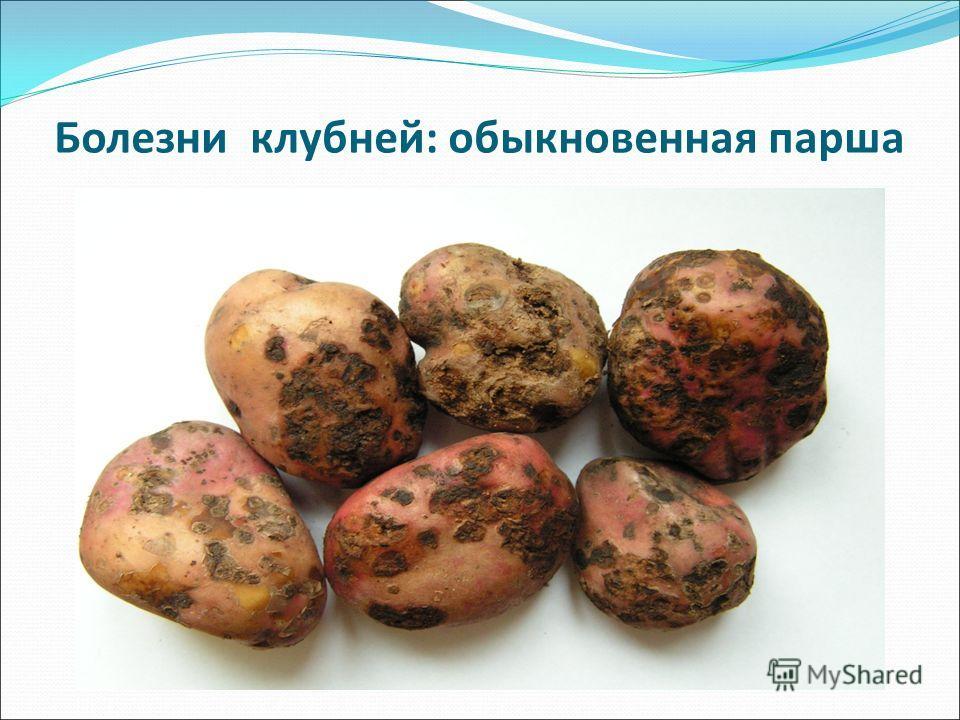 Болезнь фузариоз - лечение, фото, описание, борьба с фузариозом пшеницы и растений | bayer crop science россия