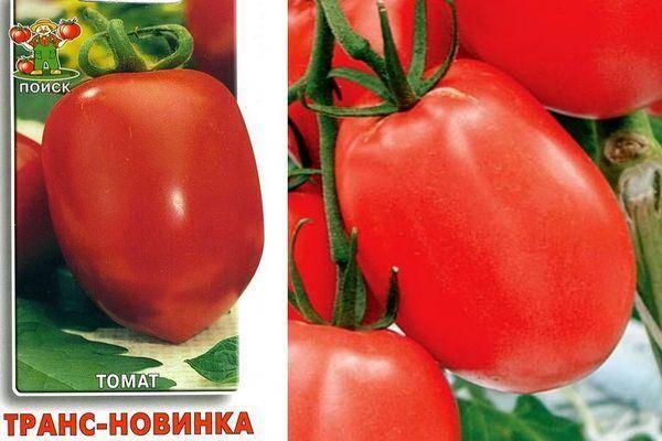 Описание сорта томата транс новинка, его характеристика и урожайность – дачные дела