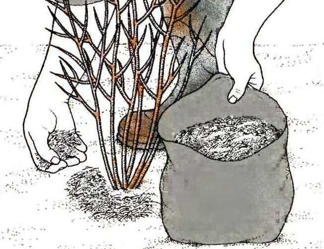 Когда подкислять почву для голубики?