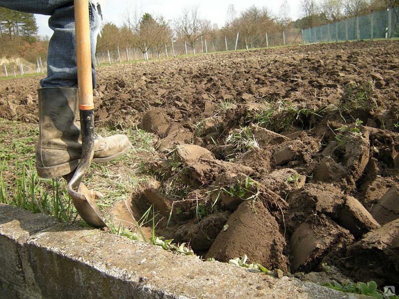Как правильно копать огород (грядки), сколько раз и когда