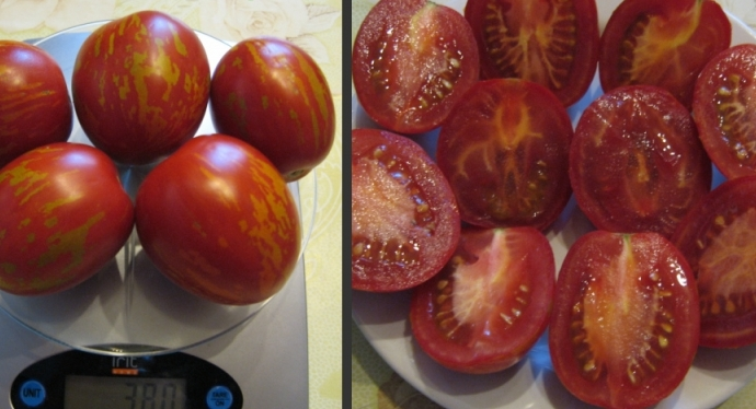 Пасхальное яйцо: пестрая красота урожайного томата. описание особенностей культуры и техники выращивания