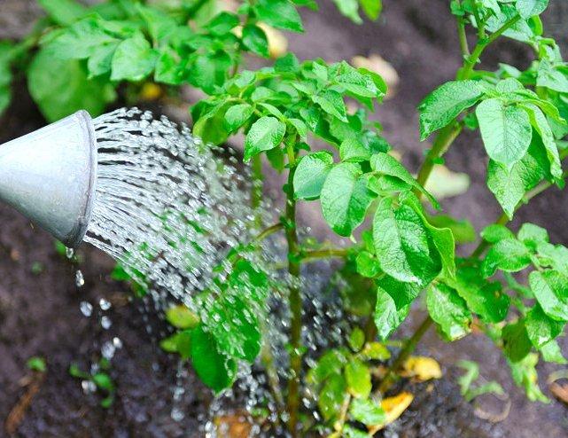 Как сохранить урожай в дождливое лето: как спасти и реанимировать