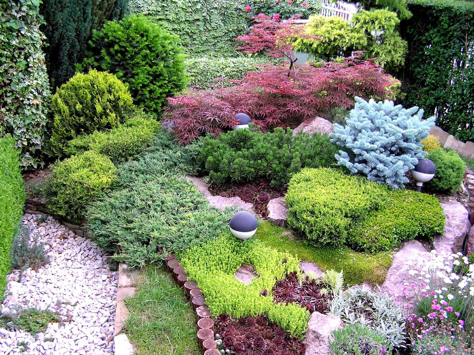 Морозостойкие декоративные кустарники (36 фото): выбираем зимостойкие многолетние красивые кусты для сада, высокие и низкорослые