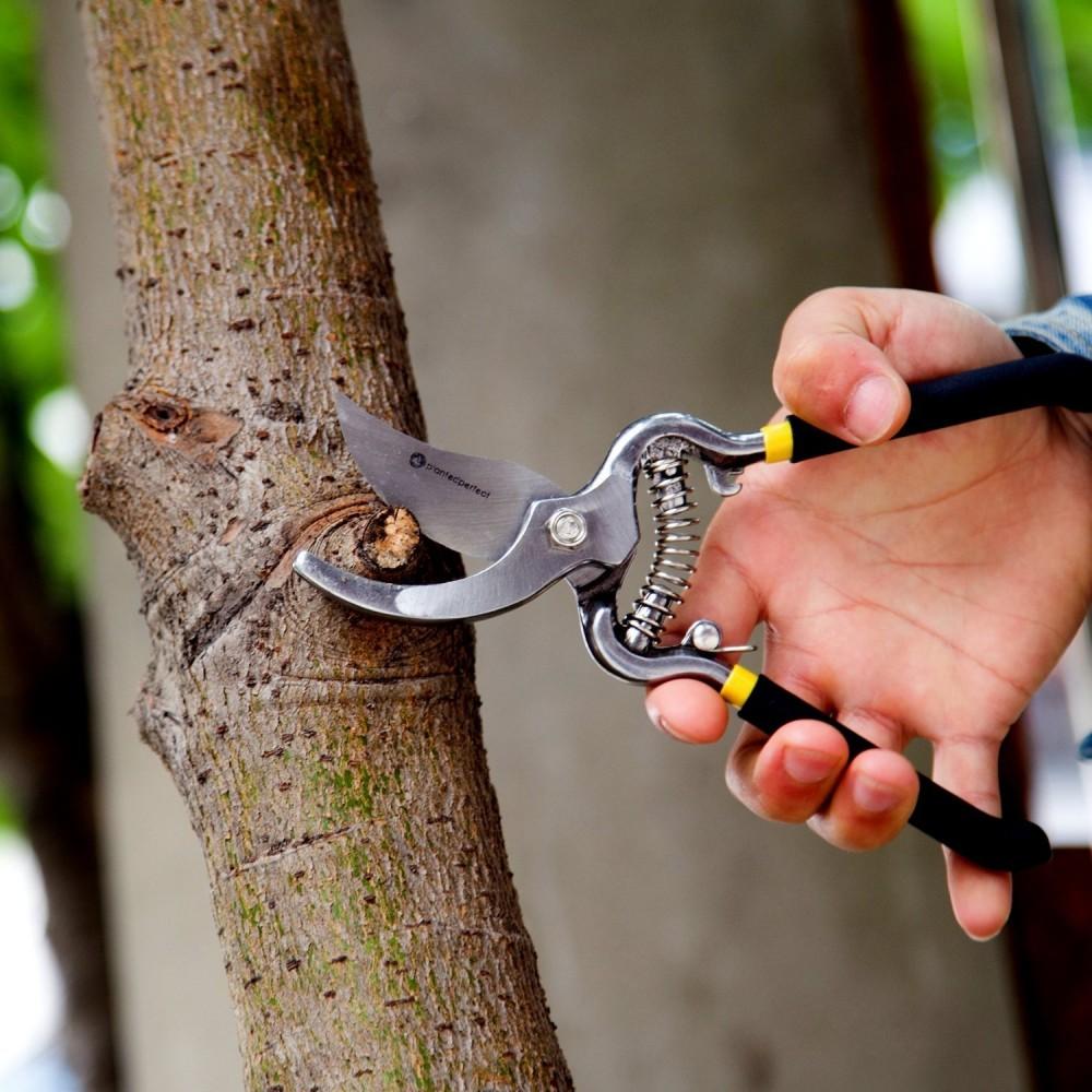Садовый секатор сучкорез на длинной ручке: характеристики и выбор