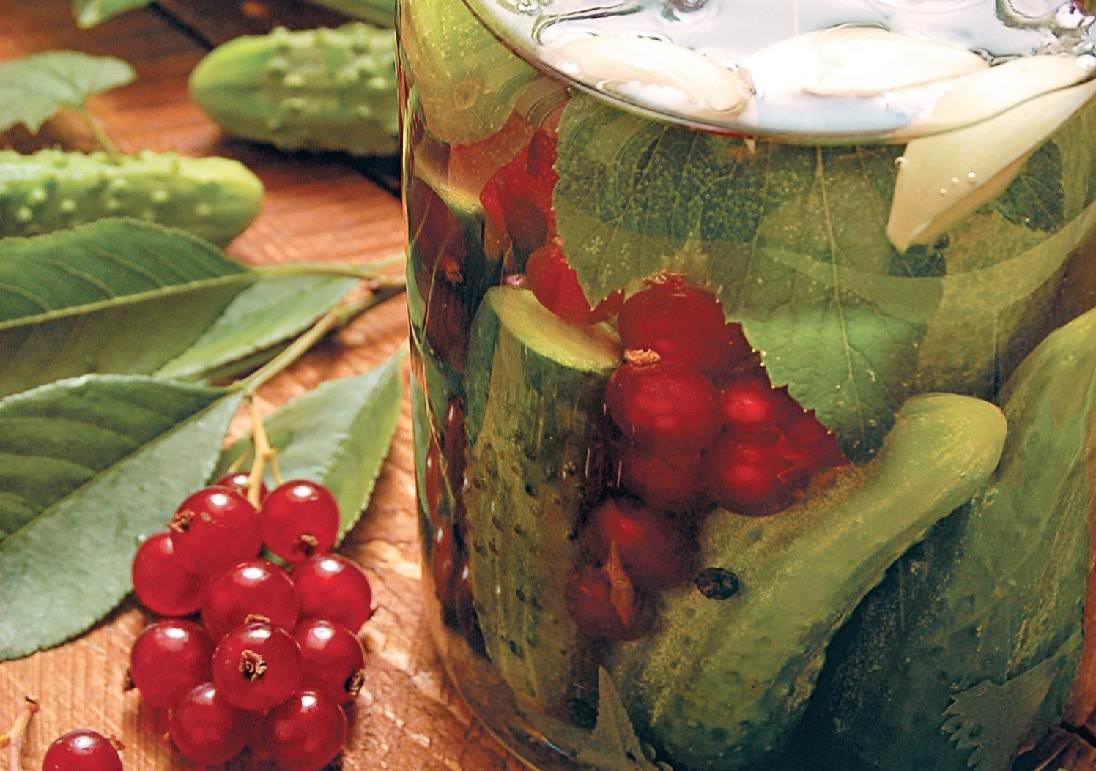 Огурцы с красной смородиной на зиму - 8 лучших рецептов