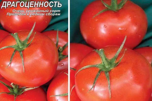 Томат аметистовая драгоценность: характеристика и описание сорта, фото, отзывы, урожайность