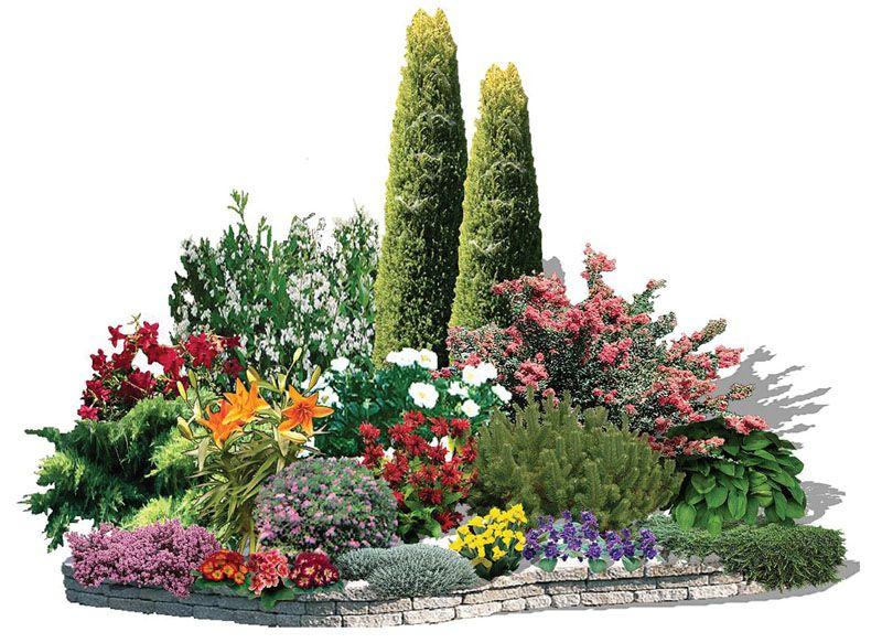 Готовые хвойные композиции: схема, выбор растений, правила - статья - журнал