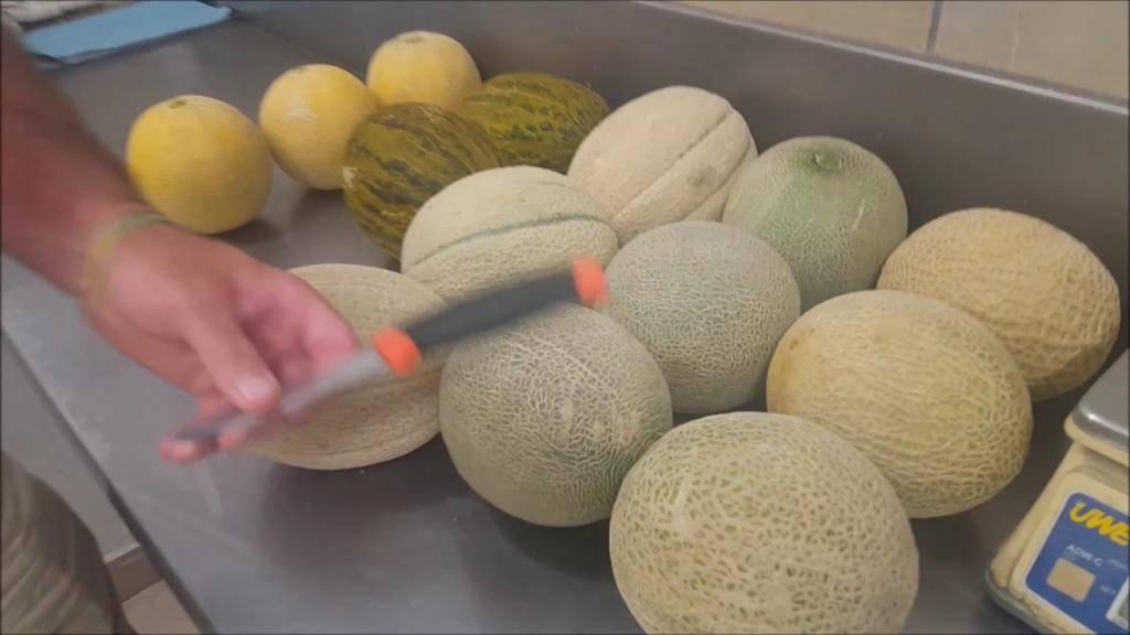 Канталупа-дыня с потрясающим вкусом: польза, правила выращивания