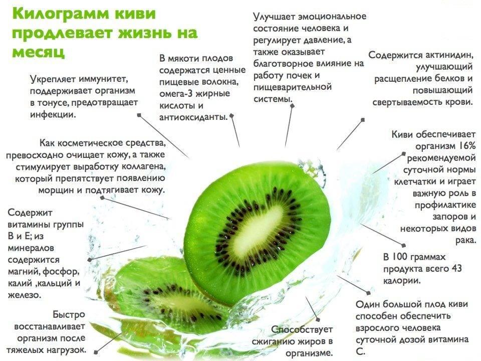 Польза и вред киви для организма, калорийность