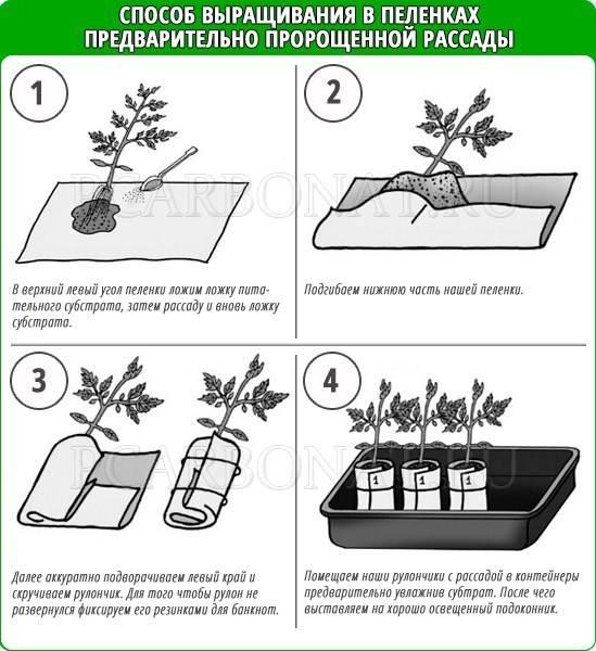 2 способа посадки помидоров в улитку. рекомендации огородникам по выращиванию и уходу