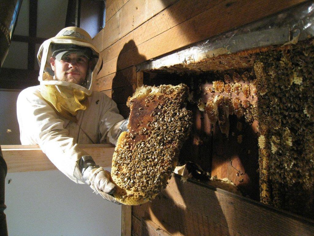 Как избавиться от пчел соcеда, в стене дома или на участке