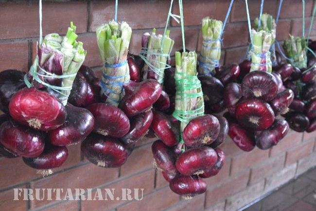 Крымский лук: выращивание в средней полосе - agroflora.ru