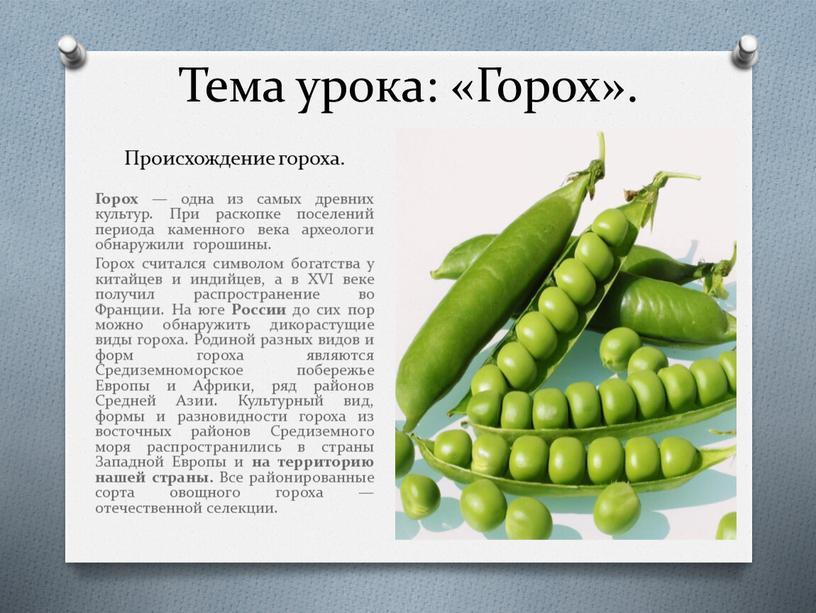 Горох: сорта и особенности выращивания
