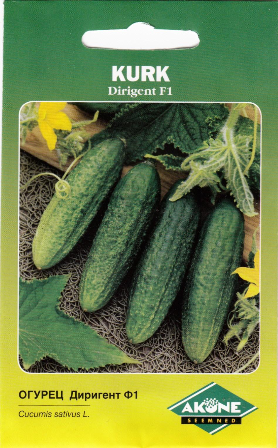 Огурец бьерн f1: характеристика и описание гибридного сорта с фото