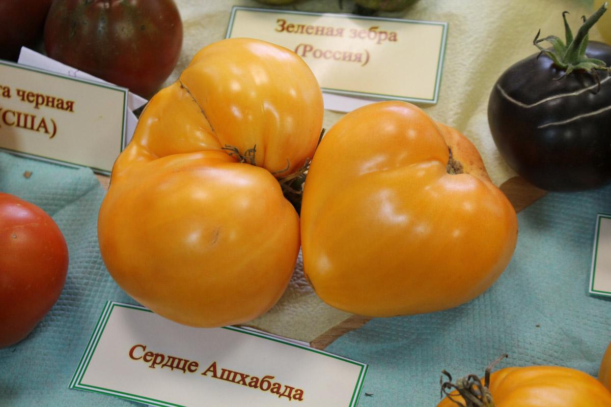 Описание сорта томата сердце ашхабада и его характеристика |