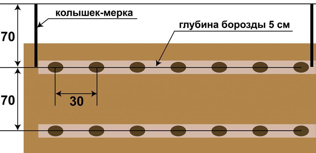 ᐉ посадка картофеля плугом (под мотоблок и ручным способом) - roza-zanoza.ru