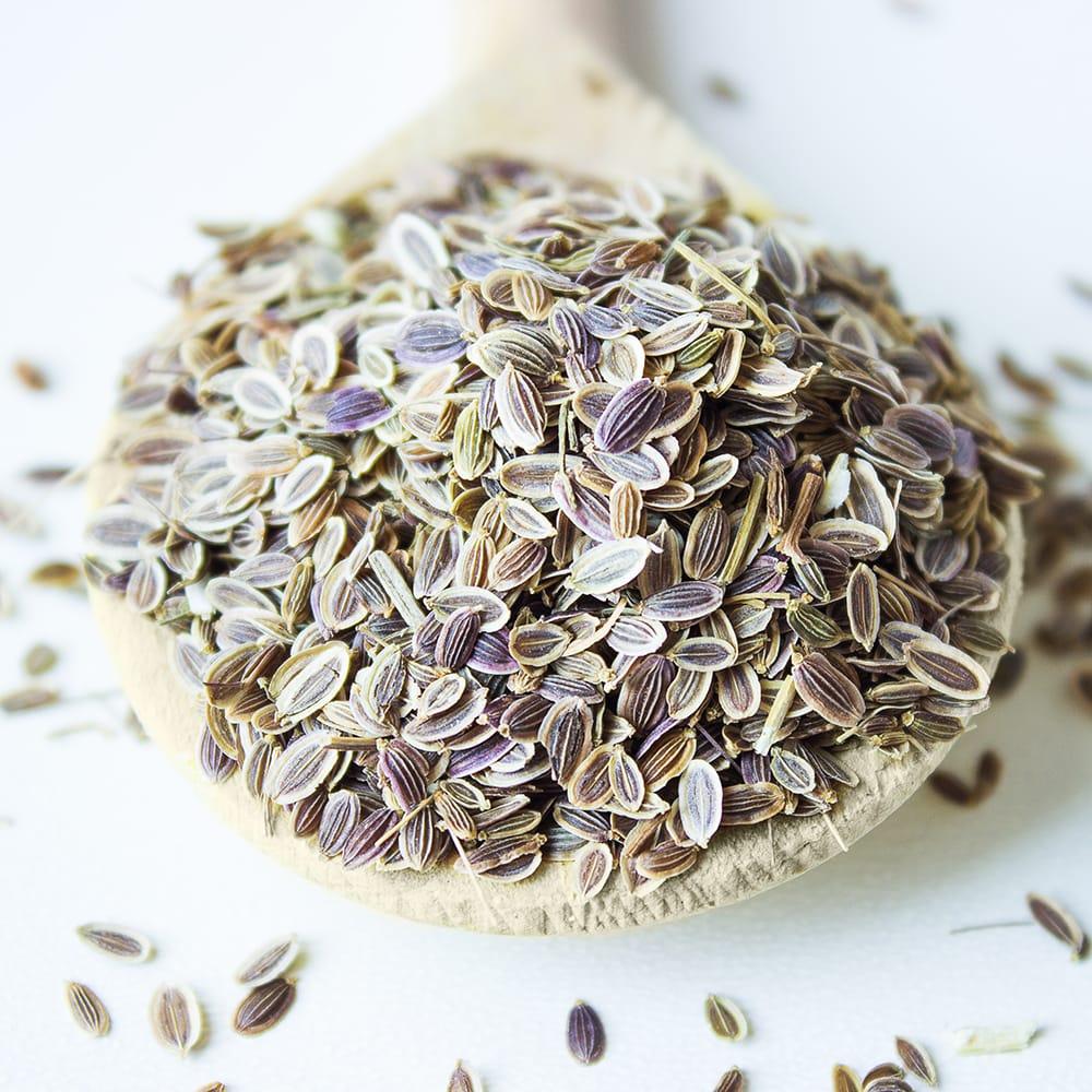 Семена укропа - польза и вред. как приготовить укропную воду