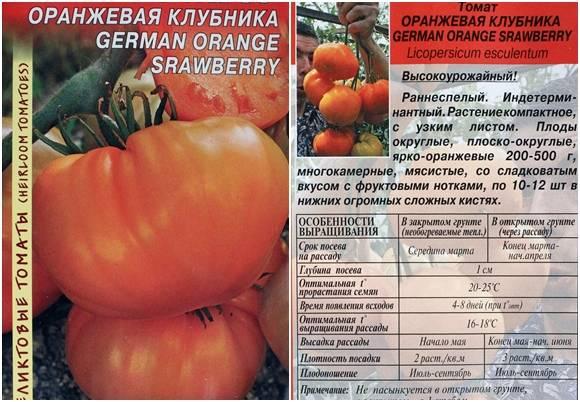 Томат красная шапочка - описание сорта, характеристика, урожайность, отзывы, фото