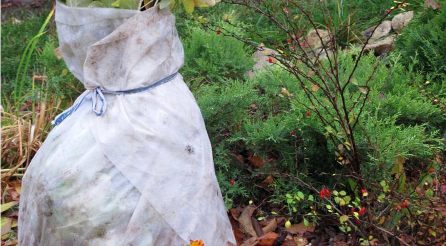 Готовим пионы на зиму: обрезка, подкормка и укрытие многолетника осенью