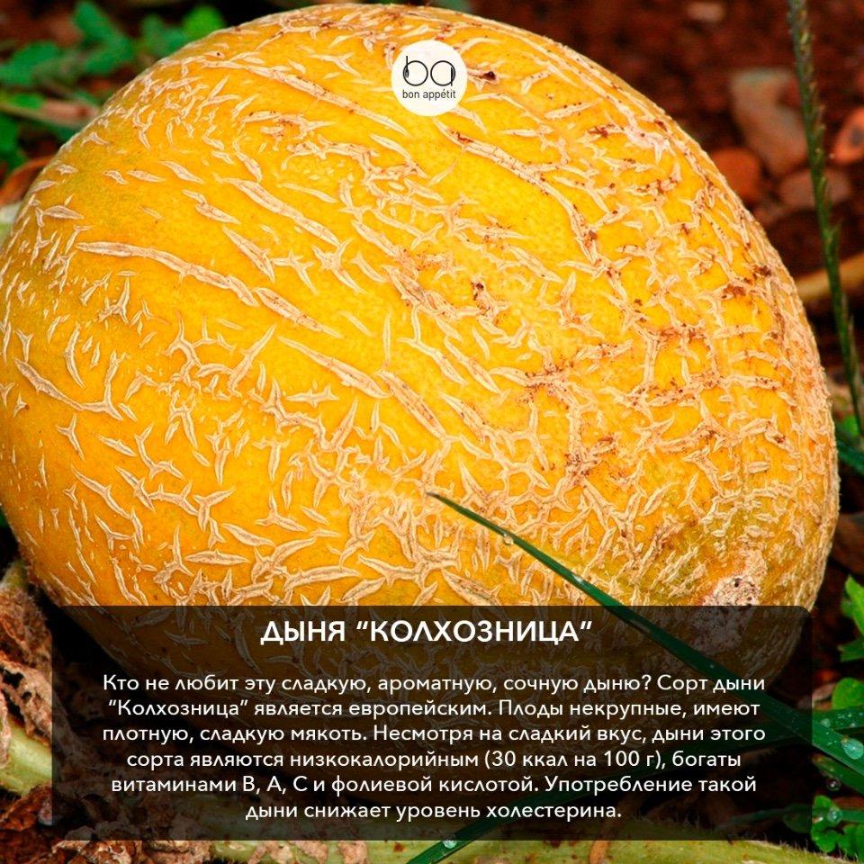 Кумкват: уникальный цитрусовый фрукт, или просто миниатюрный мандарин?