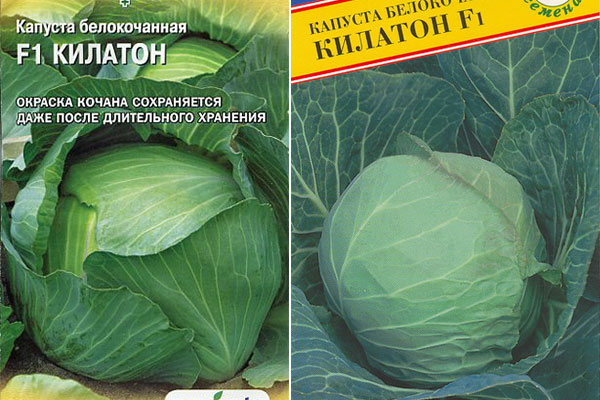 Описание и характеристики лучших сортов поздней капусты, технология посадки и ухода