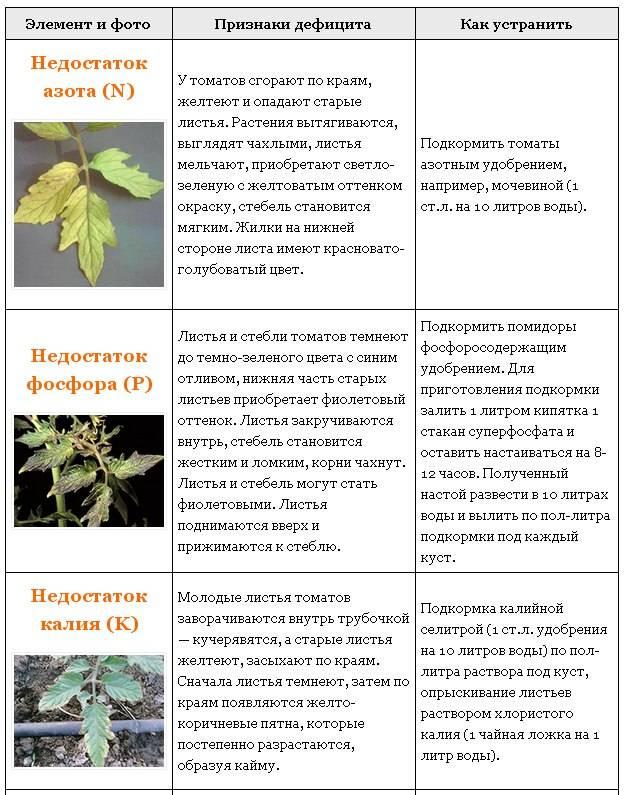 Какие семена сладкого перца выбрать? — ботаничка.ru
