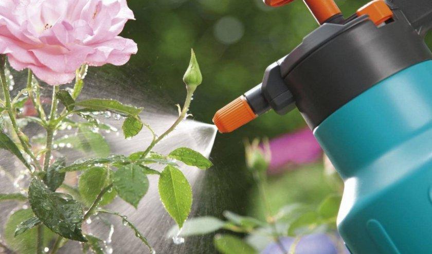 Розы в теплице. разведение на продажу как бизнес. | каталог теплиц