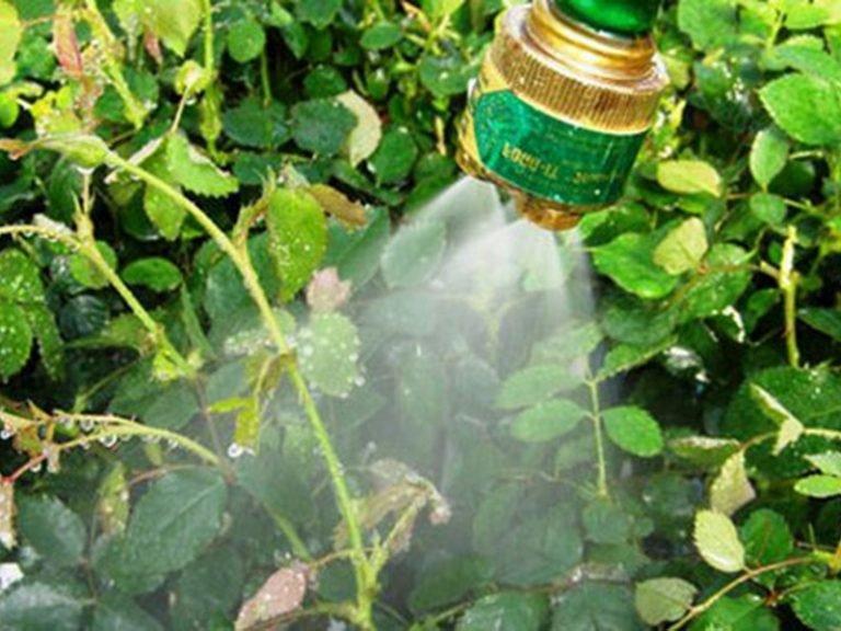 Как избавиться от тли в огороде навсегда народными средствами