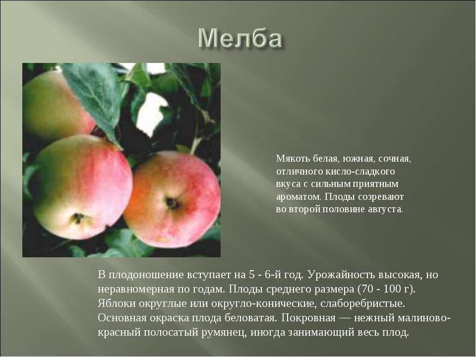 Описание и подвиды яблони сорта сахарный аркад, технология выращивания