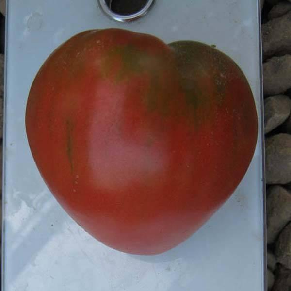Томат фиделио: характеристики и описание сорта, урожайность, фото, отзывы