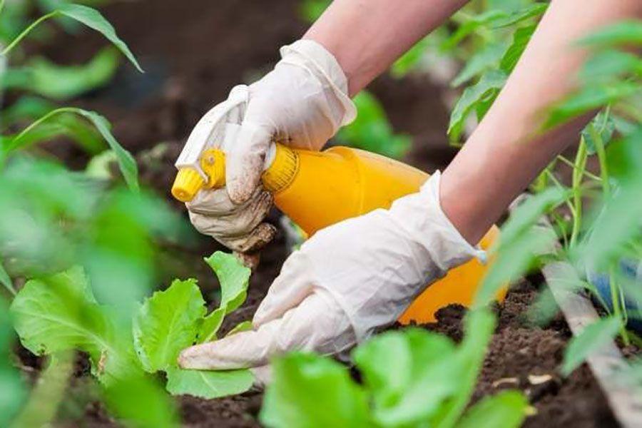Борьба с вредителями народными средствами | все о растениях