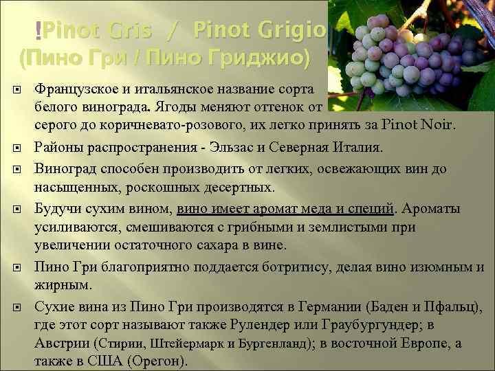 Виноград сорт пино-гри