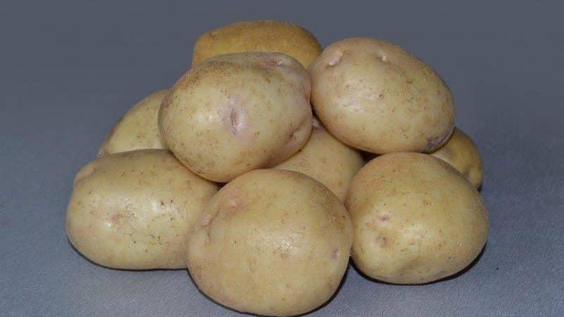 """Вкусный сорт картошки """"джелли"""""""