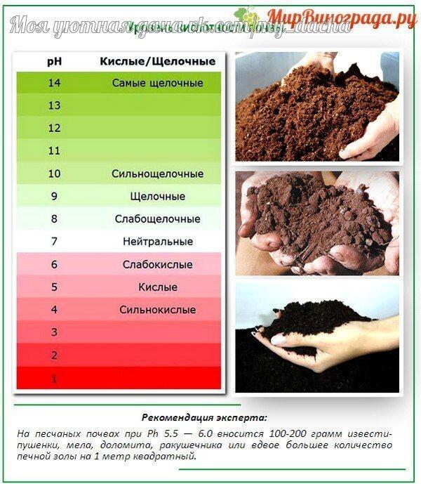 Как определить кислотность почвы? как самостоятельно в домашних условиях узнать, что на даче кислая почва? народные и другие средства