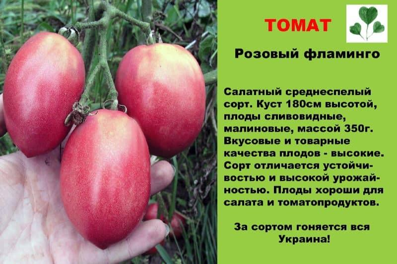 Описание сорта томата розовая жемчужина, его характеристика и урожайность – дачные дела