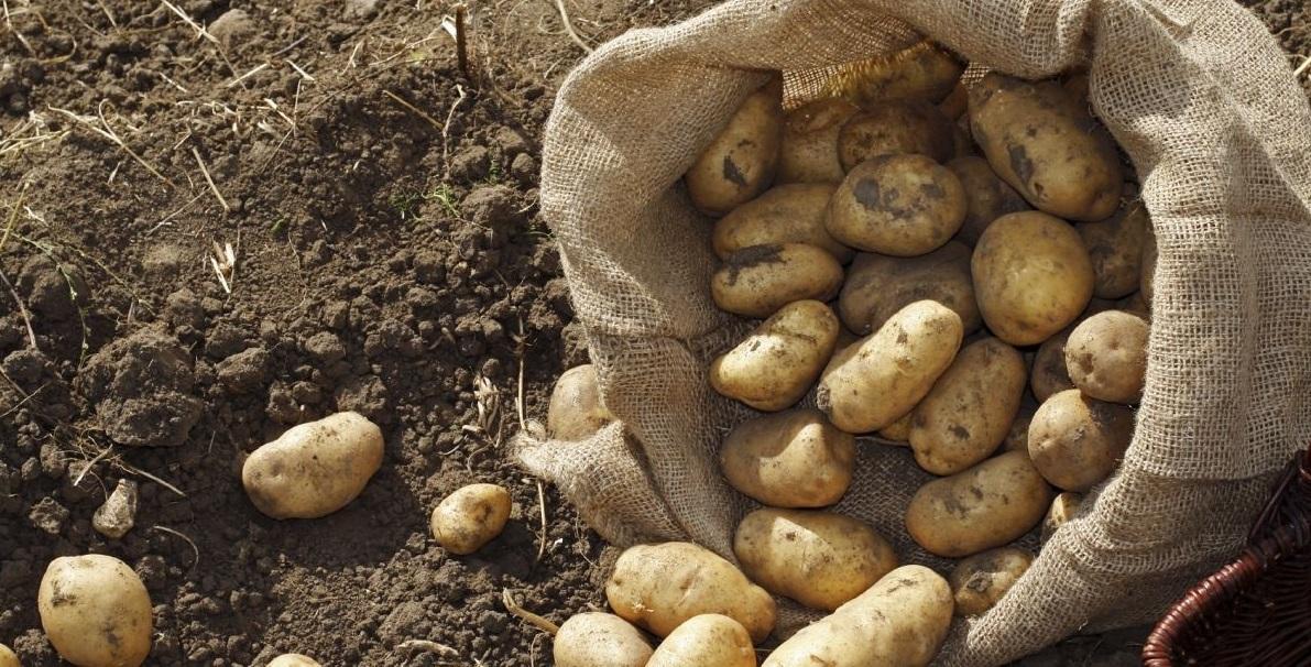 Советы по выращиванию овощей на грядке своими руками: технология возделывания с фото и видео