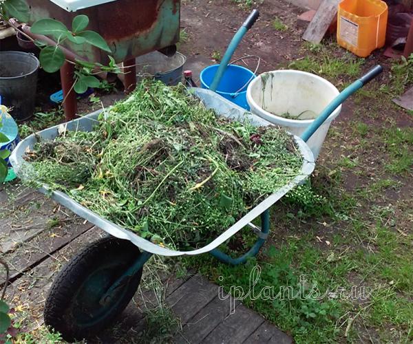 Полезные свойства сорняков: как их использовать с умом