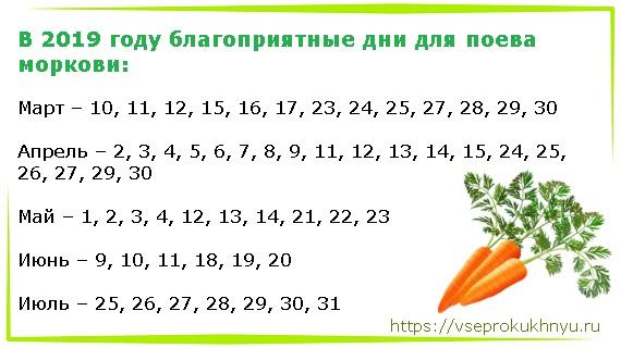 Посадка моркови в июле 2020 когда сажать морковку в грунт, теплицу, благоприятные дни, календарь